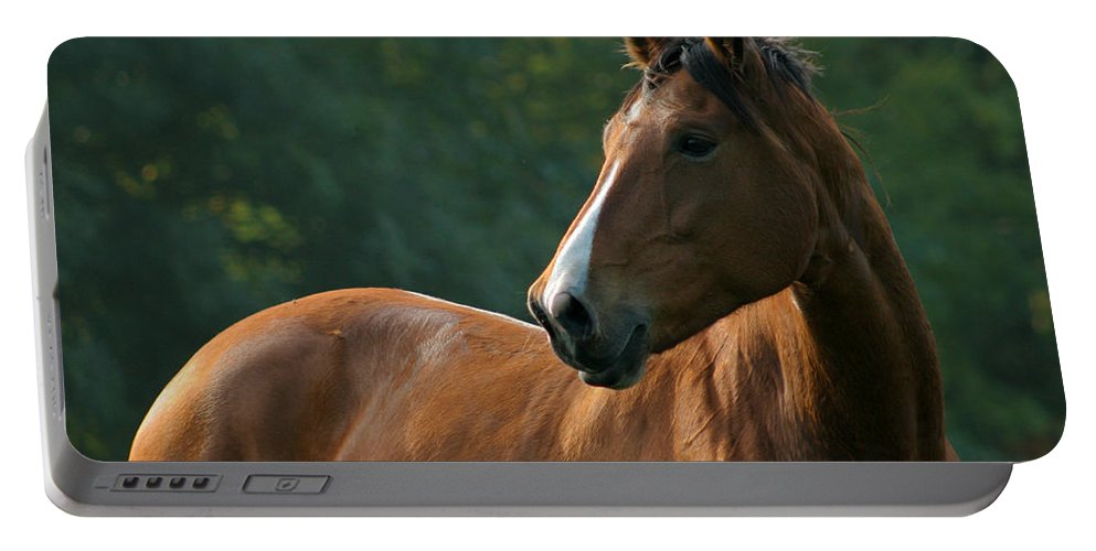 Horse Portable Battery Charger featuring the photograph The Observer by Angel Ciesniarska
