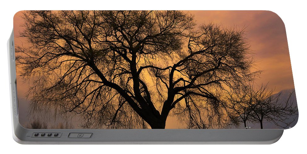 Tree Portable Battery Charger featuring the photograph Tree by Mats Silvan