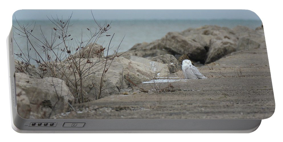 Snowy Owl Portable Battery Charger featuring the photograph Watchful by Tracy Winter