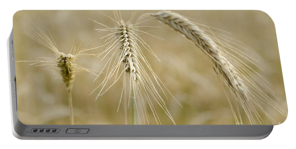 White Portable Battery Charger featuring the photograph Wheat by Mats Silvan