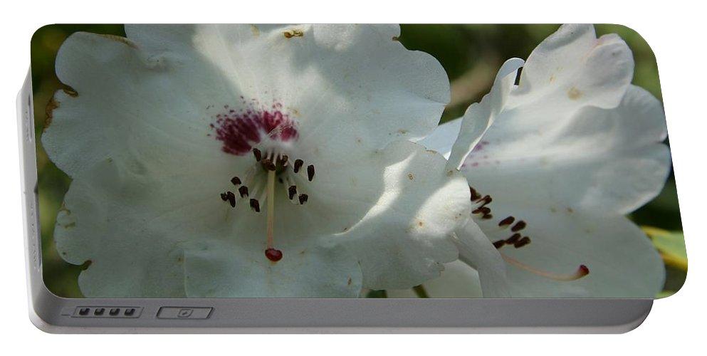 Rhododendron Portable Battery Charger featuring the photograph White Rhododendron Blossom by Christiane Schulze Art And Photography