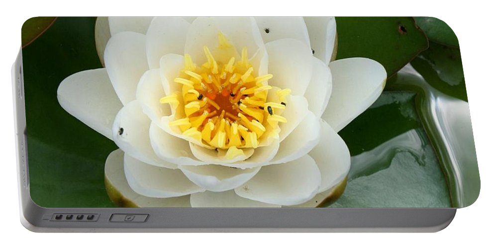 Waterlily Portable Battery Charger featuring the photograph White Waterlily by Christiane Schulze Art And Photography