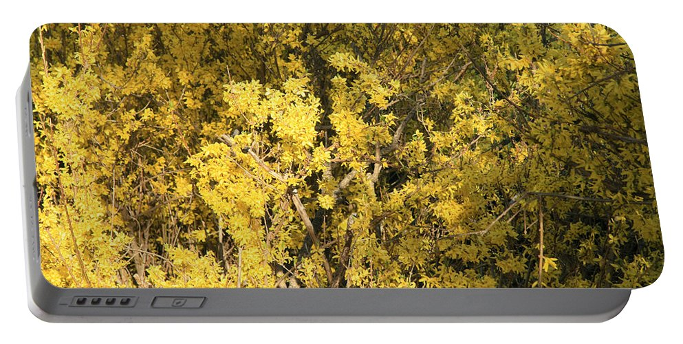 Spring Portable Battery Charger featuring the photograph Yellow Spring by Cora Wandel