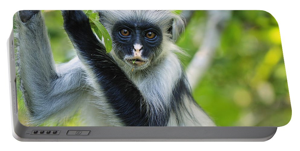 Thomas Marent Portable Battery Charger featuring the photograph Zanzibar Red Colobus In Tree Jozani by Thomas Marent
