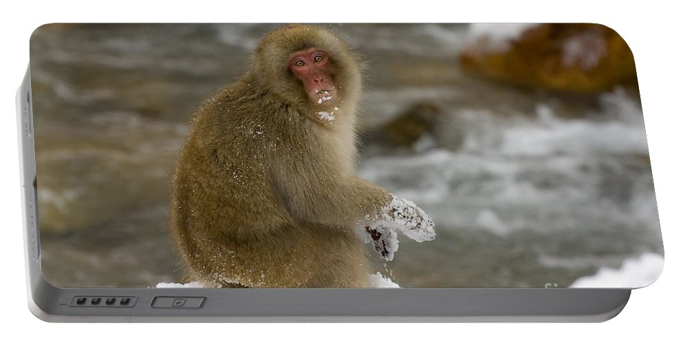 Japanese Macaque Portable Battery Charger featuring the photograph Japanese Macaque by John Shaw