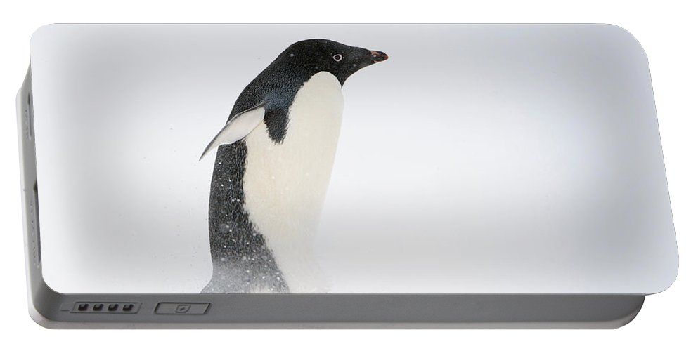 Antarctica Portable Battery Charger featuring the photograph Adelie Penguin by John Shaw
