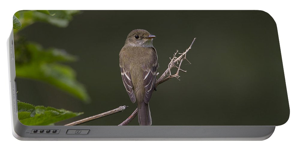 Doug Lloyd Portable Battery Charger featuring the photograph Alder Flycatcher by Doug Lloyd