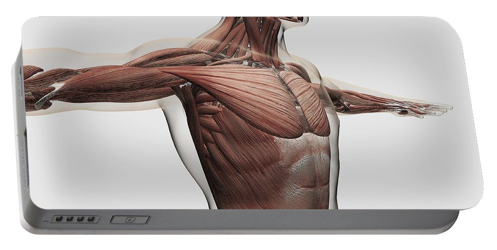 Square Image Portable Battery Charger featuring the digital art Anatomy Of Male Muscles In Upper Body by Stocktrek Images
