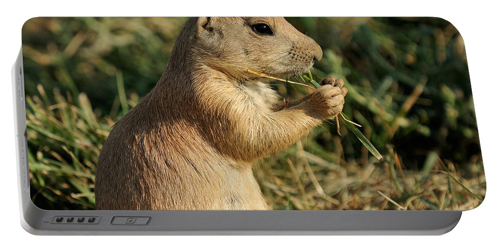 Black-tailed Prairie Dog Portable Battery Charger featuring the photograph Black-tailed Prairie Dog by George Atsametakis