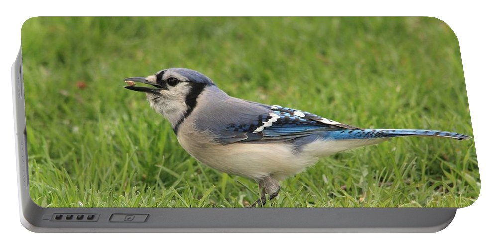 Mccombie Portable Battery Charger featuring the photograph Blue Jay by J McCombie