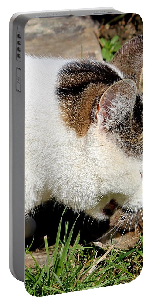 Cat Portable Battery Charger featuring the photograph cat by Heike Hultsch