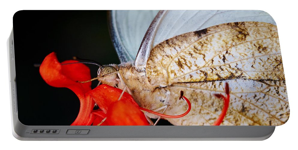 Colorful Portable Battery Charger featuring the photograph Colorful Portrait Of A Butterfly by Nick Biemans