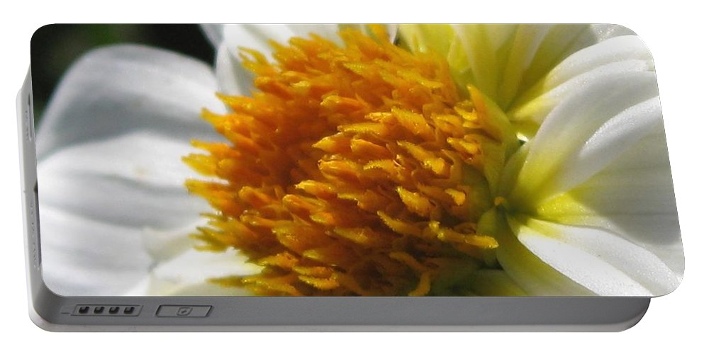 Dahlia Portable Battery Charger featuring the photograph Dahlia Named Alpen Cherub by J McCombie