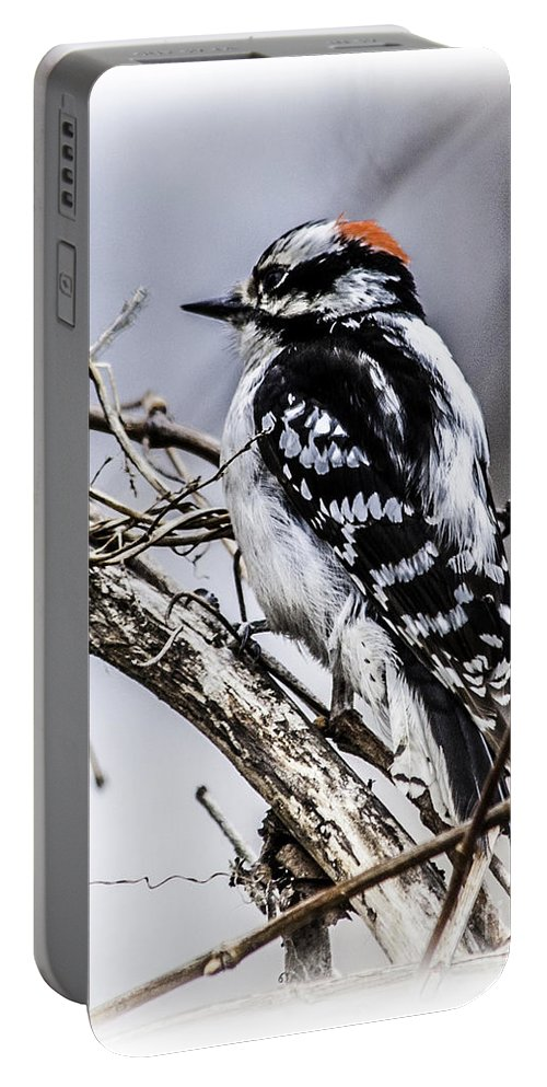 Downy Woodpecker Portable Battery Charger featuring the photograph Downy Woodpecker by Ronald Grogan
