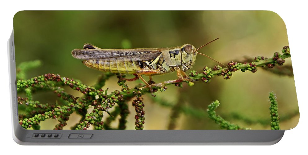 Grasshoppers Portable Battery Charger featuring the photograph Grasshopper by Olga Hamilton