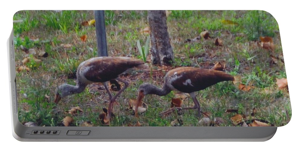 Digging Grubs In My Yard Portable Battery Charger featuring the photograph Juvenile White Ibis by Robert Floyd