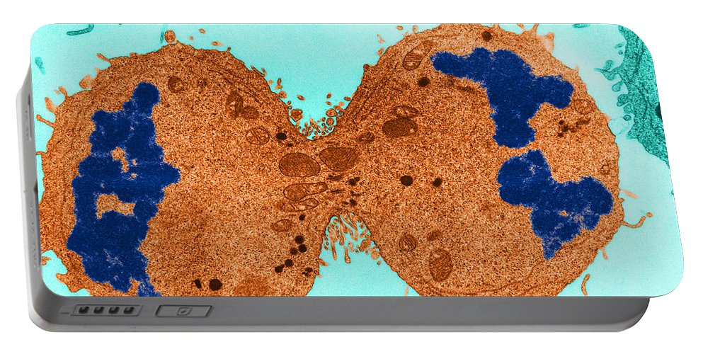 Eukaryote Portable Battery Charger featuring the photograph Mitosis, Late Telophase, Tem by David M. Phillips