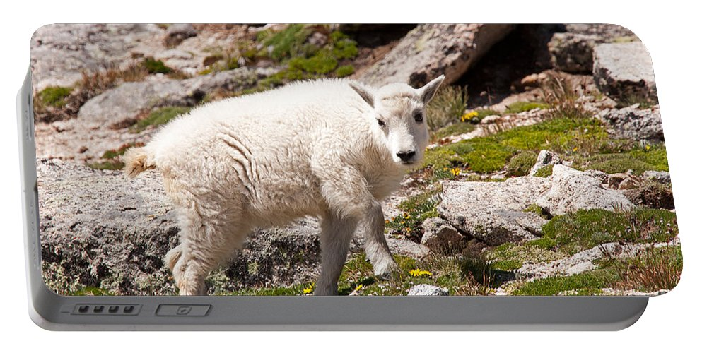 Arapaho National Forest Portable Battery Charger featuring the photograph Mountain Goat Kid On Mount Evans by Fred Stearns