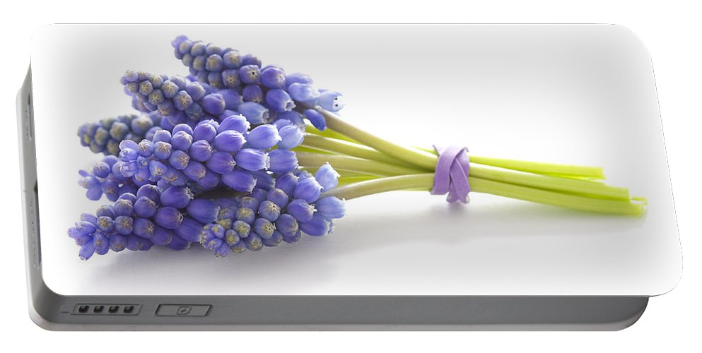 Muscari Portable Battery Charger featuring the photograph Muscari Or Grape Hyacinth by Lee Avison