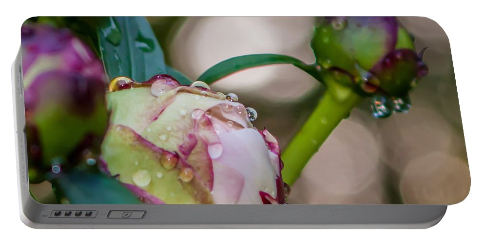 Bloom Portable Battery Charger featuring the photograph Peony With Rain Drops by Alex Grichenko