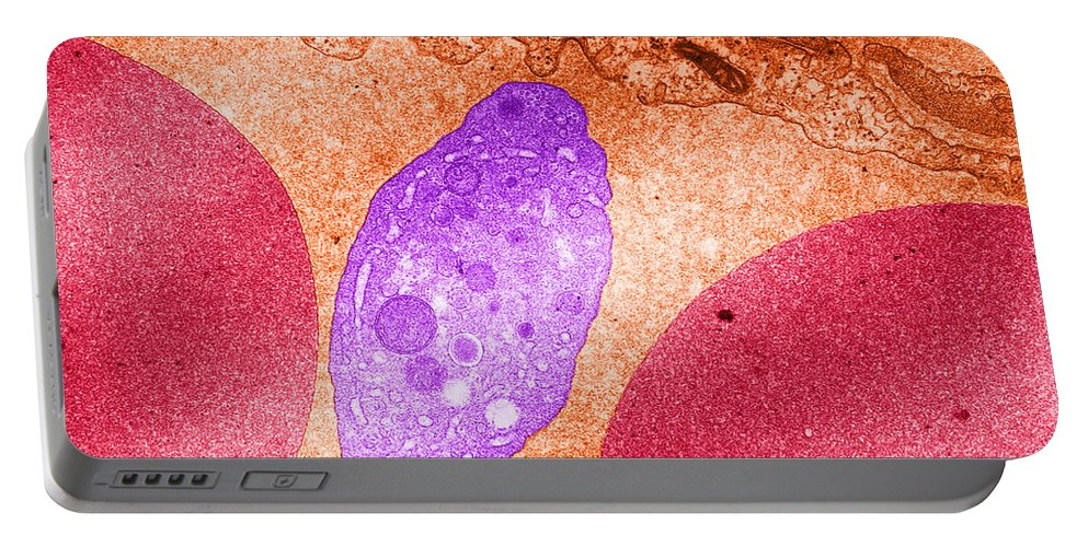 Science Portable Battery Charger featuring the photograph Platelet And Red Blood Cells, Tem by David M. Phillips