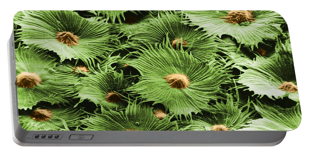 Science Portable Battery Charger featuring the photograph Russian Silverberry Leaf Sem by Asa Thoresen