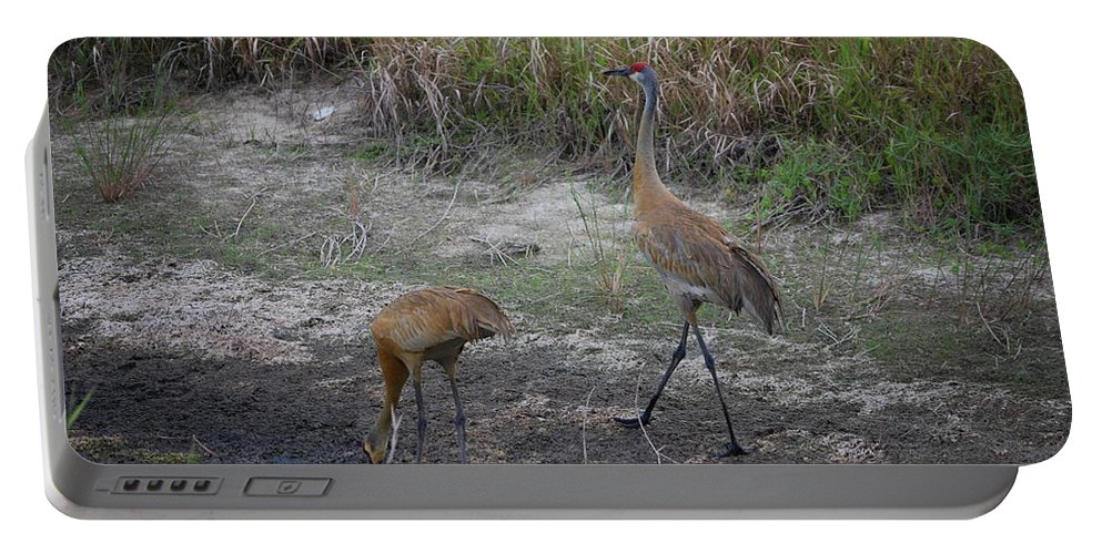 Strutting Portable Battery Charger featuring the photograph Sandhill Crane by Robert Floyd