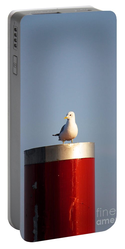 Afternoon Portable Battery Charger featuring the photograph Seagull Perched On Red Column by Jannis Werner