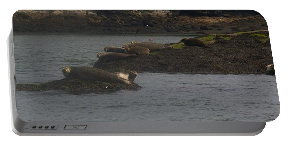 Seals Portable Battery Charger featuring the photograph Seals Series 2 by Amy-Elizabeth Toomey