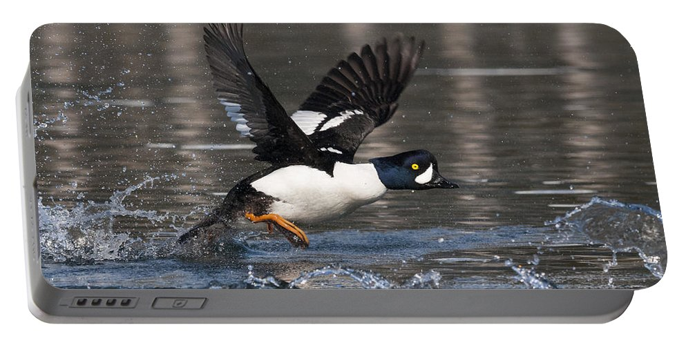 Goldeneye Portable Battery Charger featuring the photograph Splash by Ted Raynor
