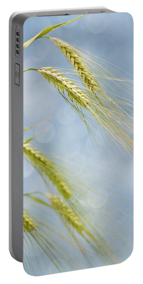 Wheat Portable Battery Charger featuring the photograph Wheat by TouTouke A Y