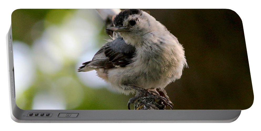 Trees Portable Battery Charger featuring the photograph White-breasted Nuthatch by Lori Tordsen