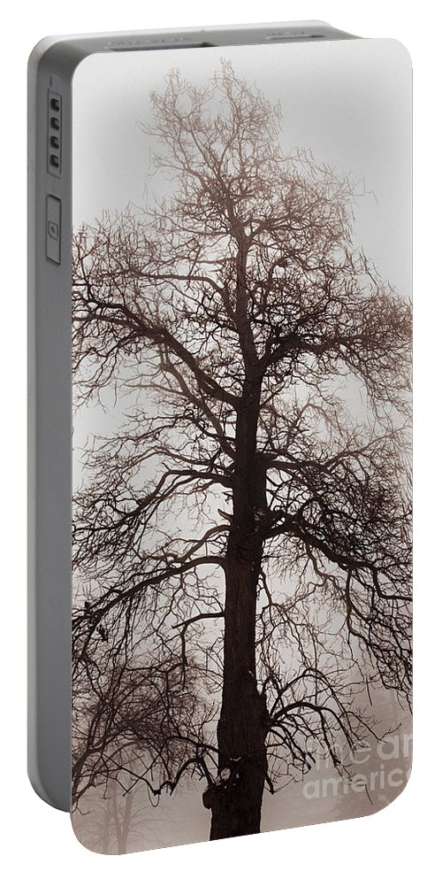 Tree Portable Battery Charger featuring the photograph Winter Tree In Fog by Elena Elisseeva