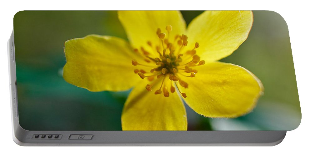Lehto Portable Battery Charger featuring the photograph Yellow Wood Anemone by Jouko Lehto