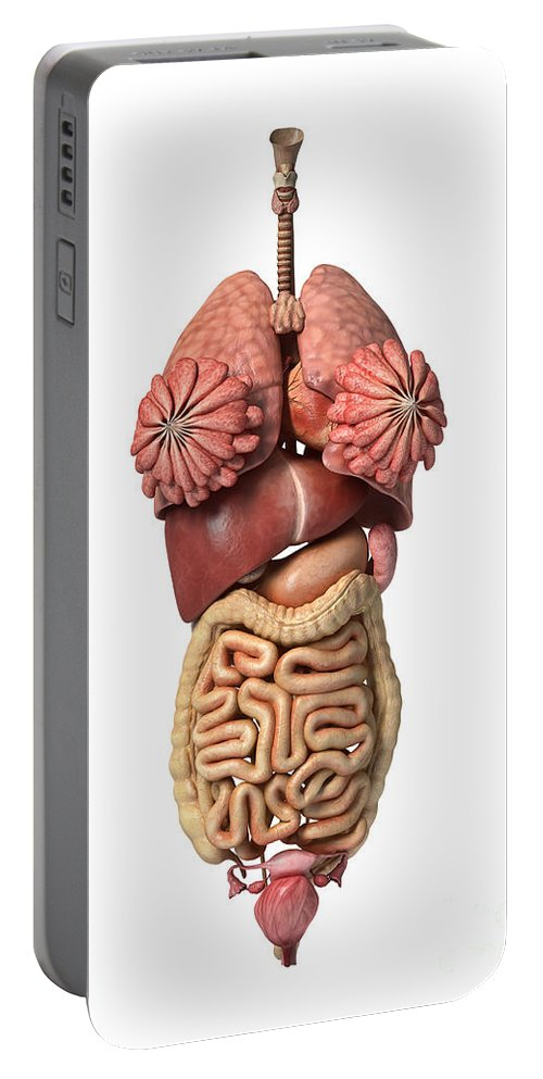 Three Dimensional Portable Battery Charger featuring the digital art 3d Rendering Of Healthy Female Internal by Leonello Calvetti
