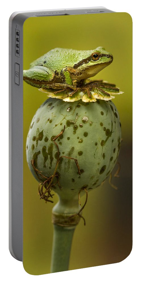 Amphibian Portable Battery Charger featuring the photograph Balancing Act by Jean Noren