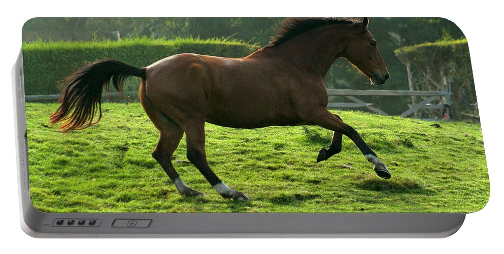 Horse Portable Battery Charger featuring the photograph Bay Horse by Angel Ciesniarska