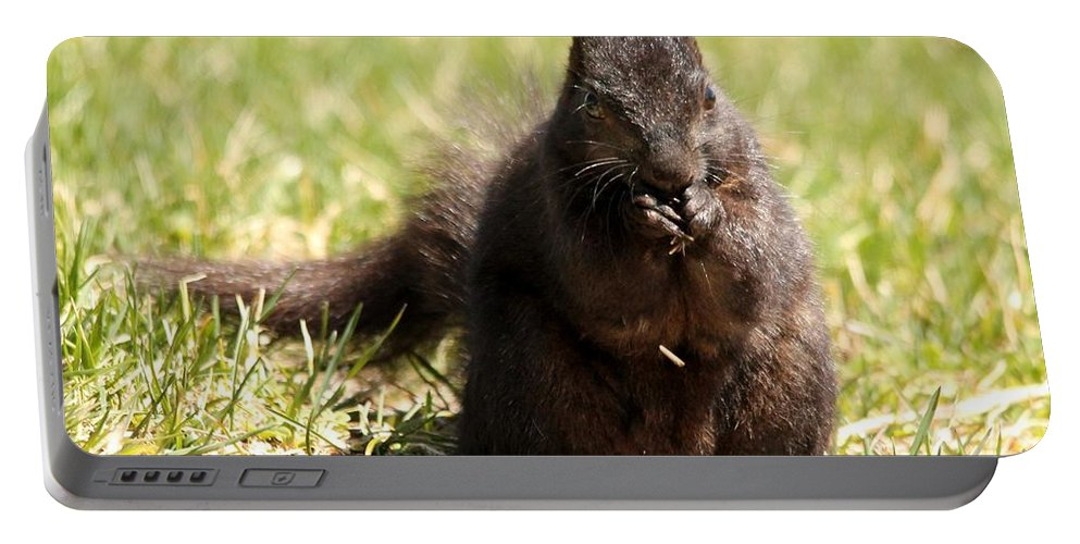 Mccombie Portable Battery Charger featuring the photograph Black Squirrel by J McCombie
