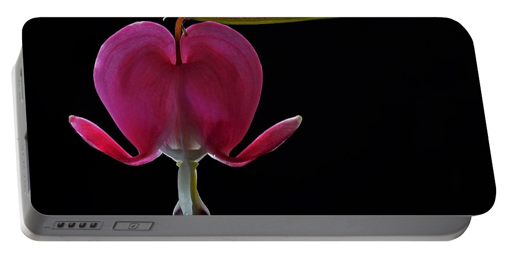Flower Portable Battery Charger featuring the photograph Bleeding Heart by FL collection