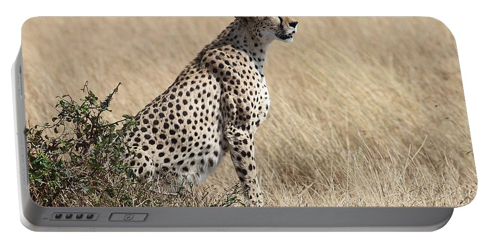 Cheetah Portable Battery Charger featuring the photograph Cheetah Searching For Prey by Carole-Anne Fooks