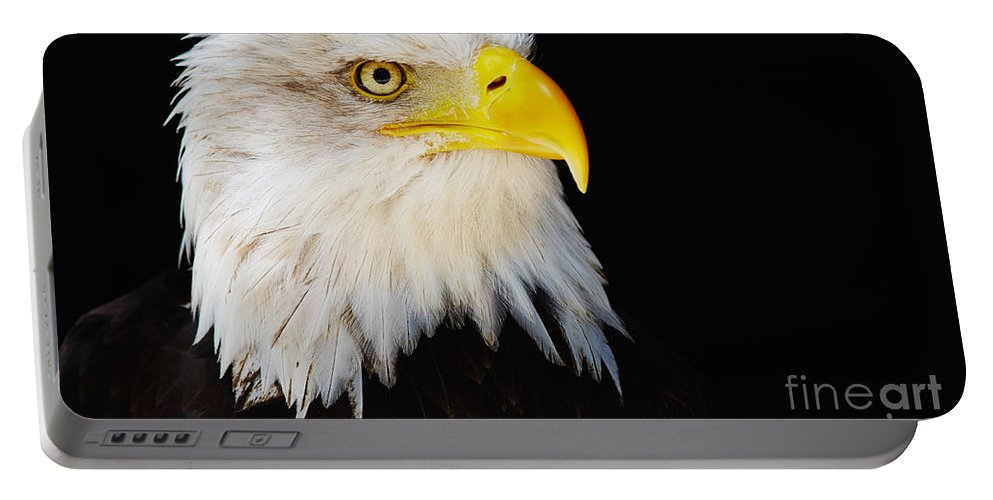 Alaska Portable Battery Charger featuring the photograph Closeup Portrait Of An American Bald Eagle by Nick Biemans