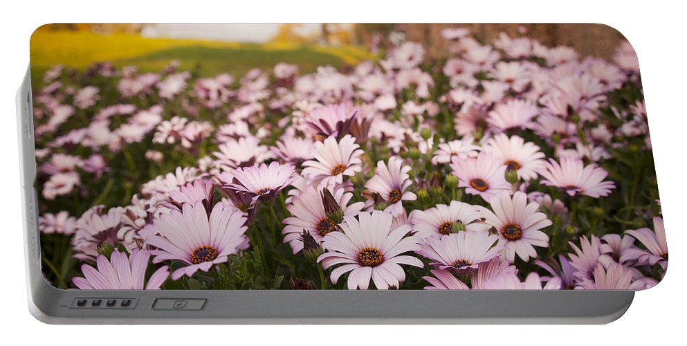 Background Portable Battery Charger featuring the photograph Daisies by Tim Hester