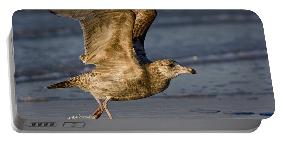 Gull Portable Battery Charger featuring the photograph Gull by Sandy Swanson