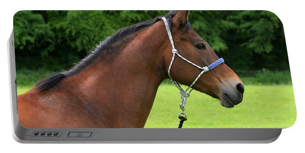 Bay Horse Portable Battery Charger featuring the photograph Horse Portrait by Angel Ciesniarska
