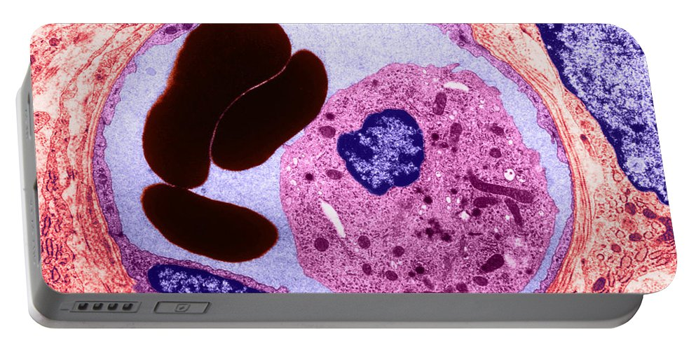 Cell Portable Battery Charger featuring the photograph Human Capillary, Tem by David M. Phillips
