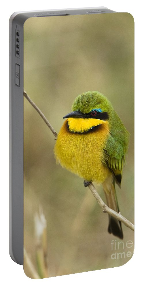 African Fauna Portable Battery Charger featuring the photograph Little Bee-eater by John Shaw