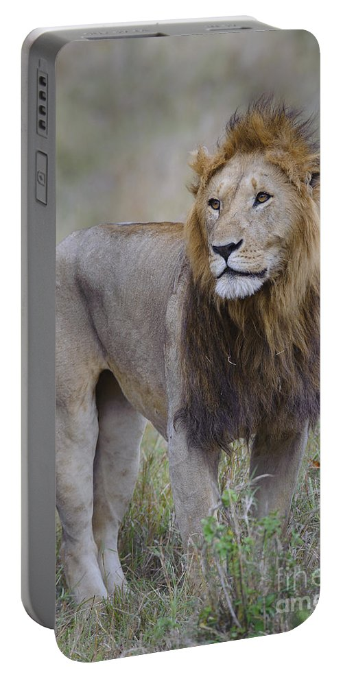 Africa Portable Battery Charger featuring the photograph Male Lion by John Shaw
