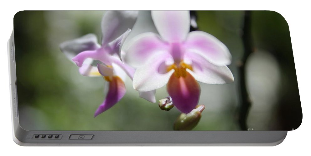 Pink Portable Battery Charger featuring the photograph Orchids Dance by Irina Davis