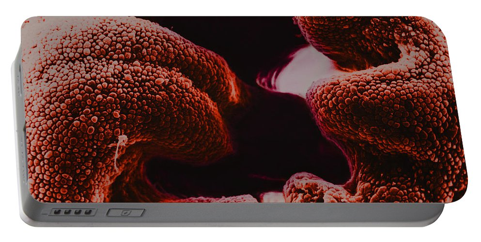 Science Portable Battery Charger featuring the photograph Oviduct Entrance, Sem by David M. Phillips
