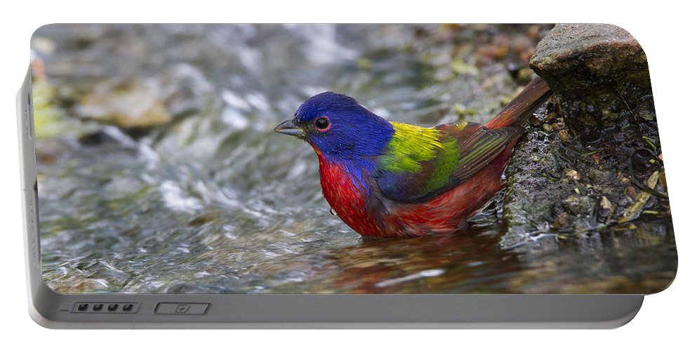 Doug Lloyd Portable Battery Charger featuring the photograph Painted Bunting by Doug Lloyd